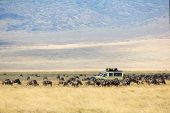 Safari car on game drive in a herd of wildebeests in Ngorongoro, Tanzania. poster