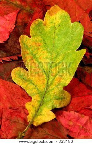 autumn leaves 03