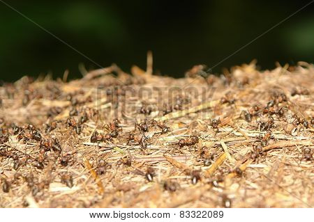 ants nest close up