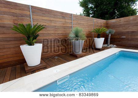 A Nice Swimming Pool