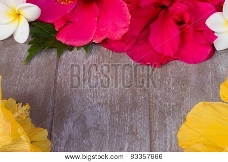 colorful hibiscus flowers with tag