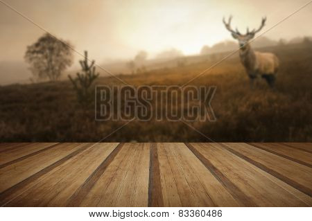 Foggy Misty Autumn Forest Landscape At Dawn With Red Deer Stag With Wooden Planks Floor