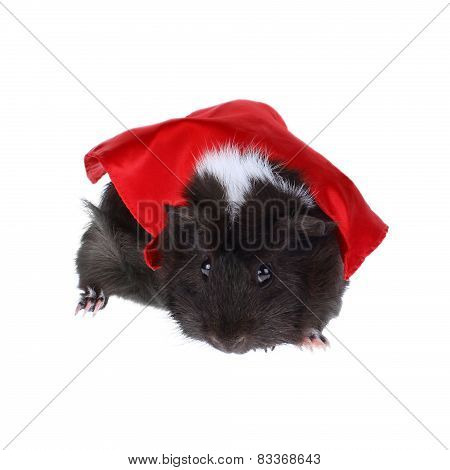 Super Hero Guinea Pig