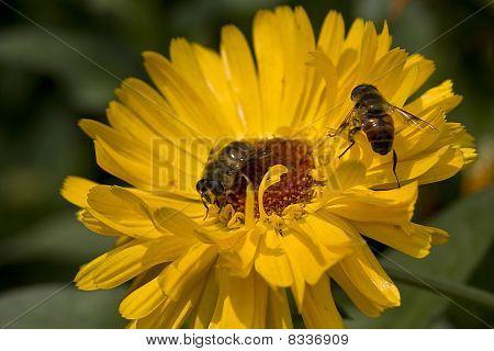 twin bee