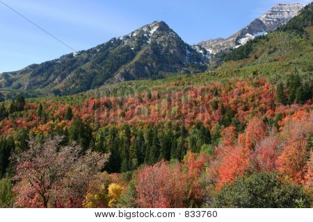 Autumn colors abound near Sundance Resort, Utah
