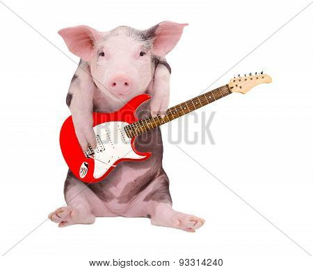 Portrait of a pig who plays the the guitar