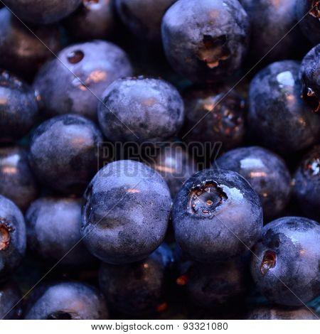 Closeup Of Organic Blueberries, Square Shape