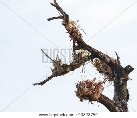 The Single Tree.