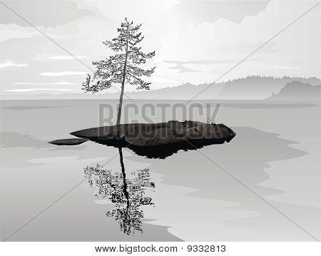 Solitary pine on rock