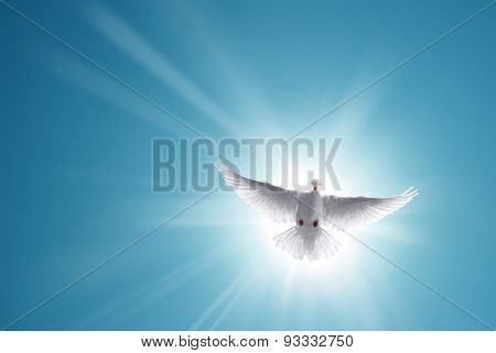 White Holy Dove Flying In Blue Sky