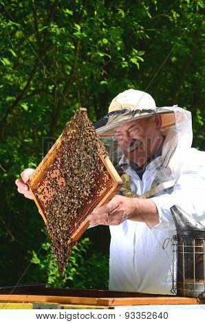 Experienced senior apiarist making inspection in apiary in the springtime