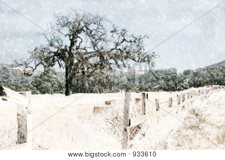 Oak Tree And Fence Snow