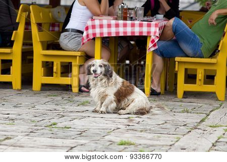 Dog In Front Of Restaurant Table