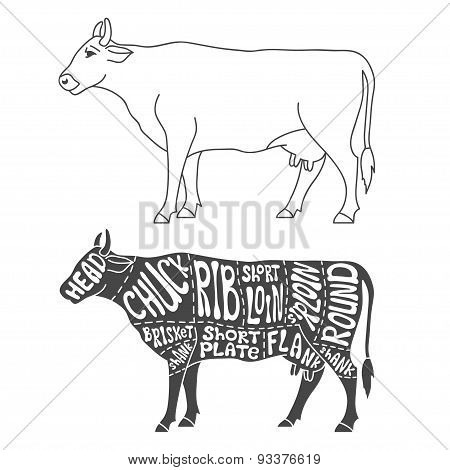 Beef Cuts Diagram Vector Photo Free Trial