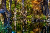Bright Crisp Beautiful Fall Foliage on Large Cypress Trees Surrounding the Clear Frio River, Texas. poster