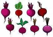 Garden purple beets and beetroots vegetables with sappy stalks and wavy green leaves, for fresh food or agriculture design poster
