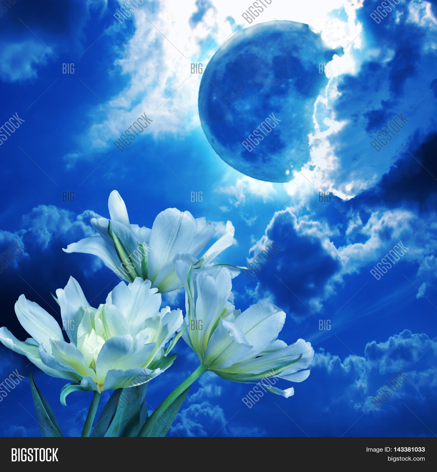 Full Moon Glowing Among The Fluffy Clouds In Night Sky Shines Blue Light White Flowers