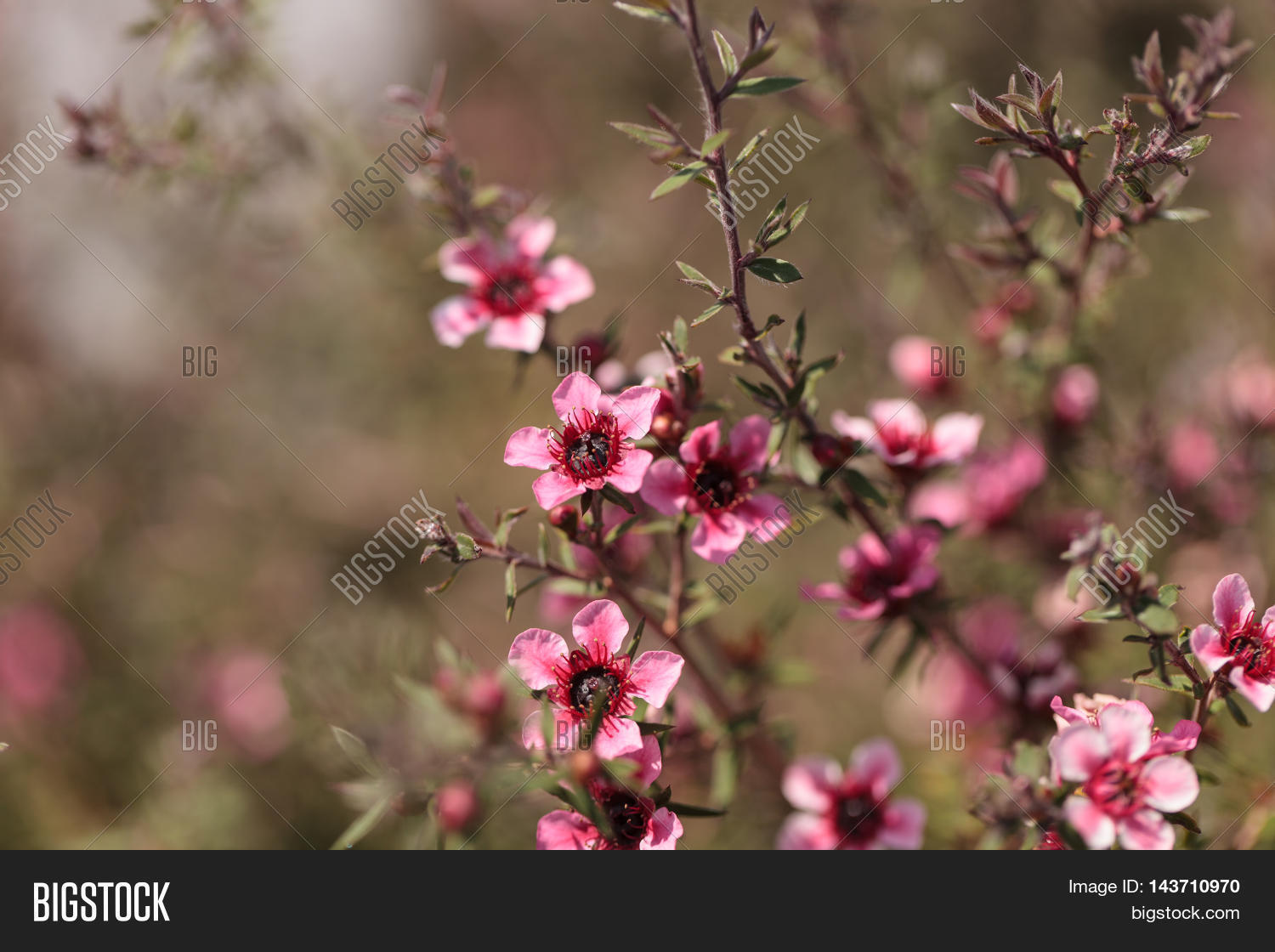 Tiny Pink Flowers On Image Photo Free Trial Bigstock