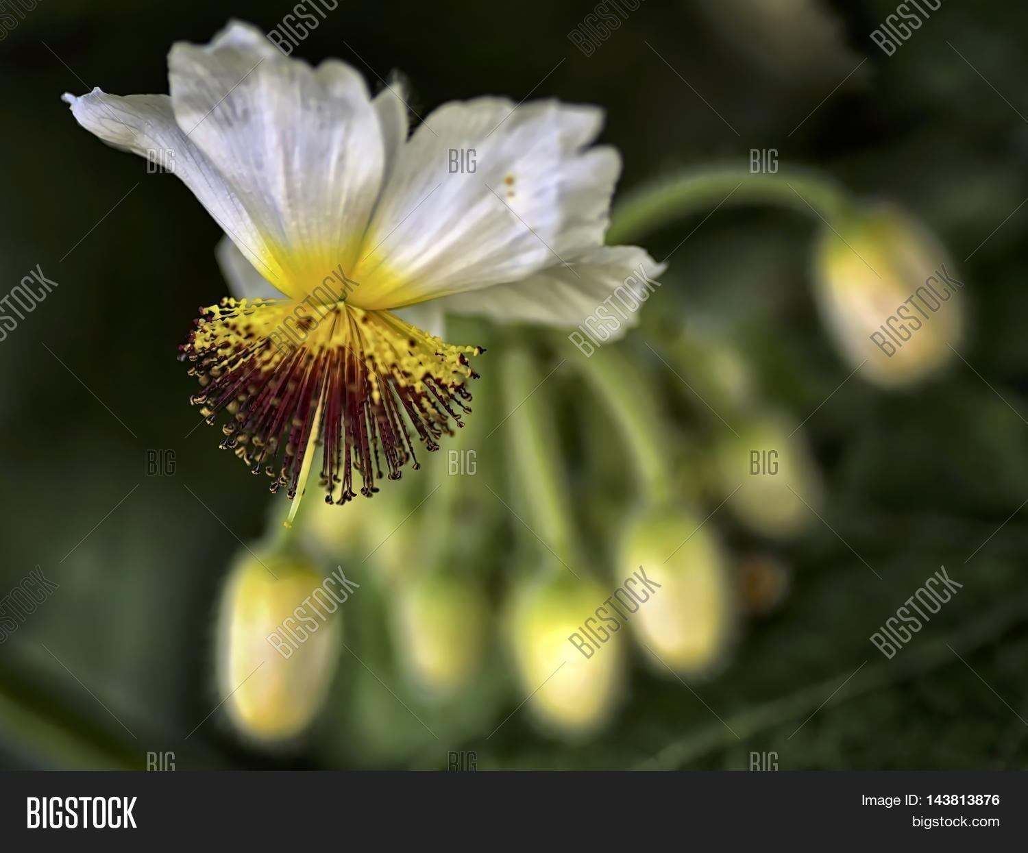 A Tilia Flower On Bokeh Backgound
