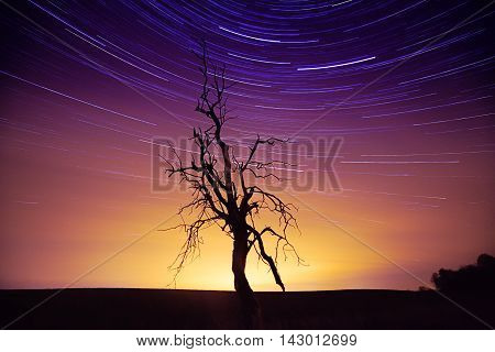 The silhouette of dried tree against astonishing sunset sky with star trails