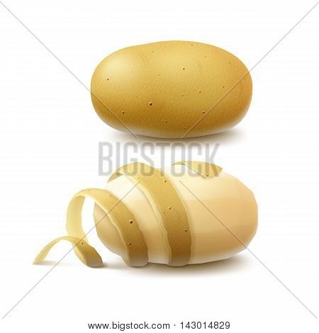 Vector Set of New Yellow Raw Whole Unpeeled Potato and Peeled Potato with twisted peel Close up Isolated on White Background