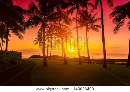 Tropical beach sunset with silhouette palm trees