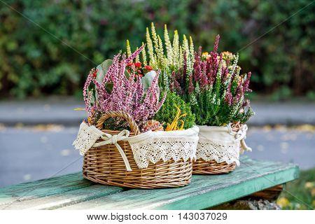 Calluna and kalanchoe in decorative flower pot