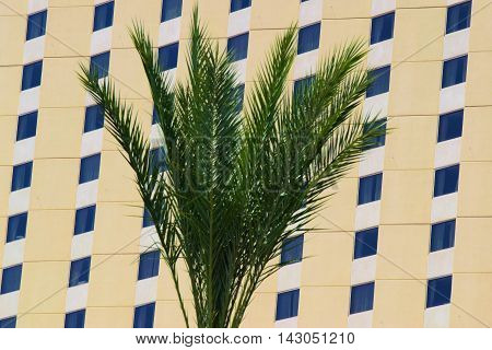 Palm Tree with a highrise building beyond taken in a desert community