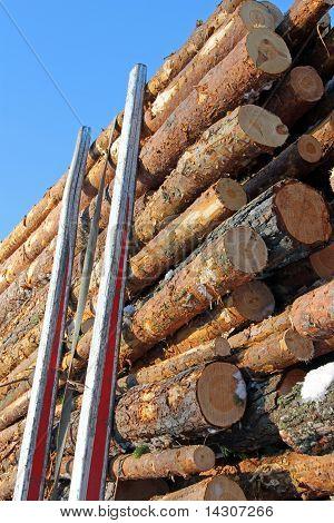 Pine Logs On Logging Trailer