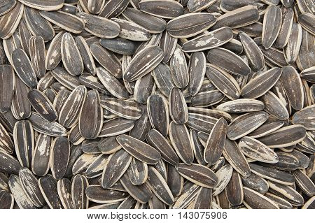 Close-up and detail of sunflower seeds background