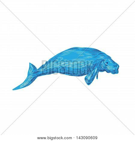 Drawing sketch style illustration of a dugong marine mammal viewed from side set on isolated white background.