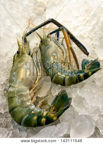 Big Sea Tiger Prawn on tray with Ice in the market