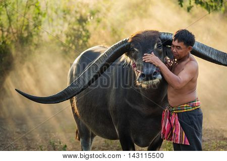 Middle-aged men show love and care to his concept Buffalo Buffalo Thailand.
