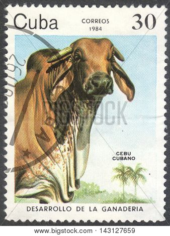 MOSCOW RUSSIA - CIRCA JUNE 2016: a post stamp printed in CUBA shows a Cuban Zebu (Bos primigenius indicus) cow the series