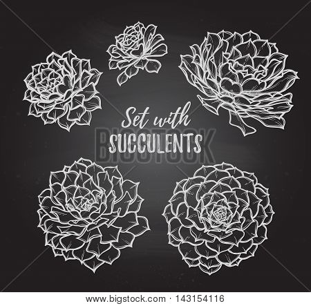 Hand Drawn Vector Illustrations - Set With Succulents. Sketch On Chalky Background. Perfect For Wedd