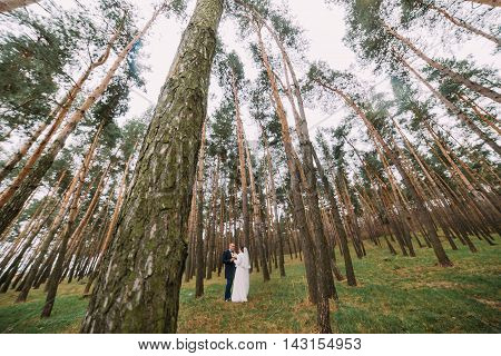 Happy stylish newlywed pair posing in the young pine forest.