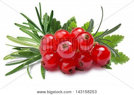 Redcurrant With Rosemary, Paths