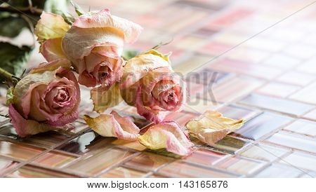 The Bouquet of dried pink roses. Closeup