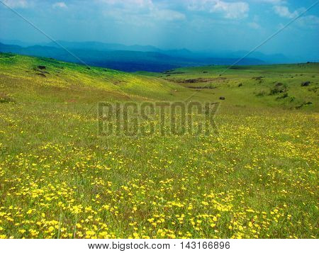 A beautiful meadow in India with a flower bed that has blossomed in the monsoon season.