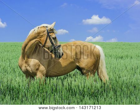 light brown horse with a white mane and tail stands in a green field under a blue sky