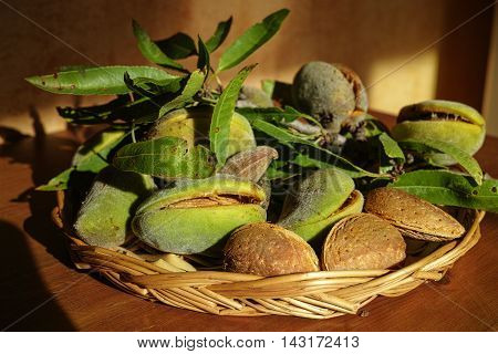 Fresh ripe unpeeled almonds with nutshell and leaves in Provence France
