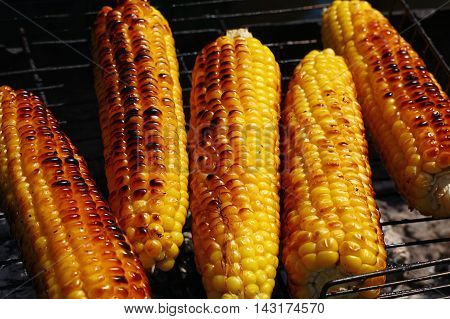 Cooked Corn Cobs On Barbecue Grill