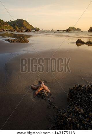 A starfish soaks up the last of the sun