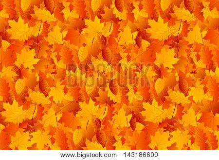 Background with autumn yellow and red leaves, maple leaves, oak leaves and poplar leaves