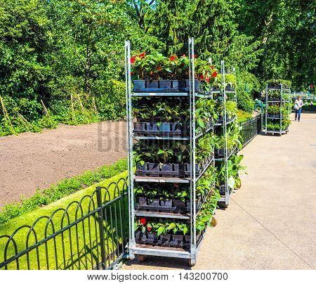 St James Park Gardening (hdr)
