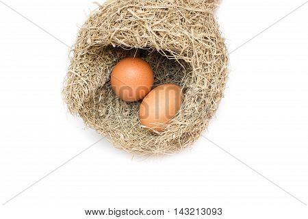 Skylark Nests and egg Close up Baya weaver  on white background.
