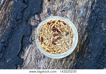 maggots in the bank on a wooden surface