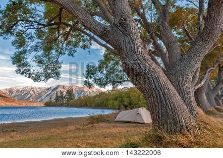 Campsite at Lake Pearson / Moana Rua Wildlife Refuge located in Craigieburn Forest Park in Canterbury region South Island of New Zealand poster
