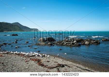 Rugged Coastline Of Kaikoura