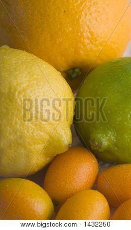 Citrus Sampler